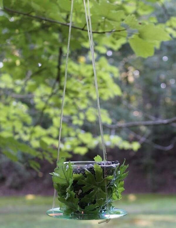 Utilize o CD como suporte de plantas