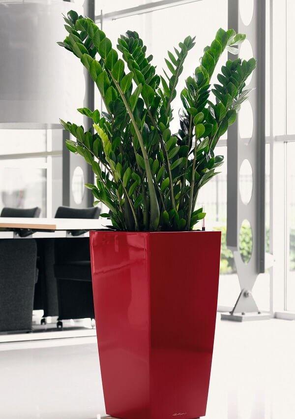 Zamioculcas em vaso vermelho