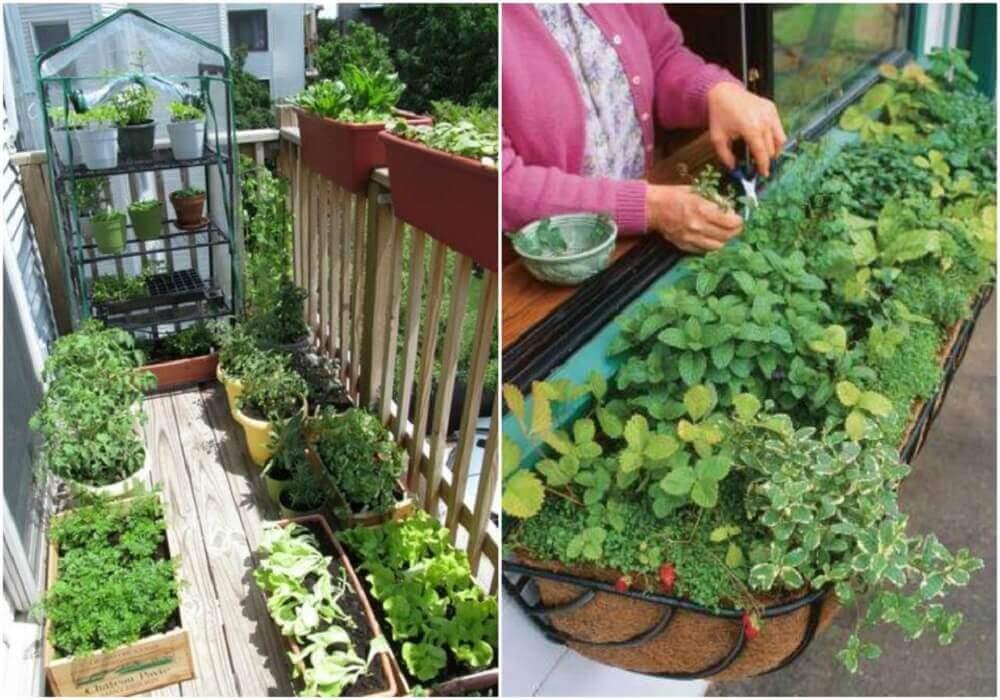 como fazer horta em apartamento
