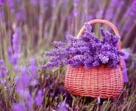 31. A fotos de plantas com lavandas sempre ficam lindas devido às cores vivas de azul e roxo
