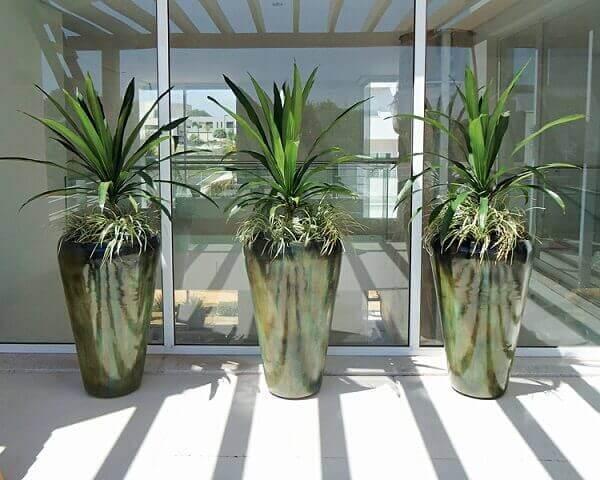 Plantas com vasos para varandas