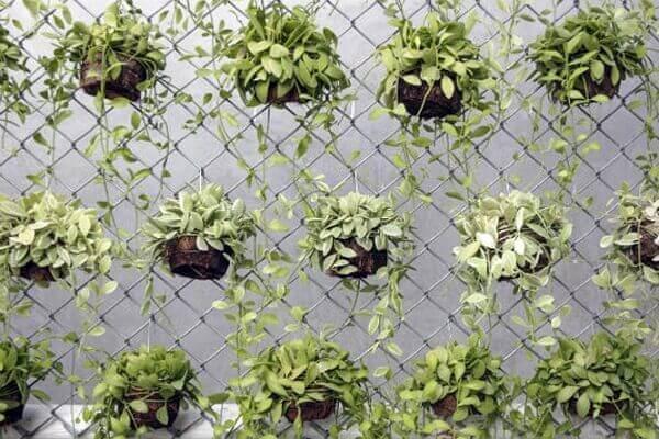 Plantas com vasos pendurados