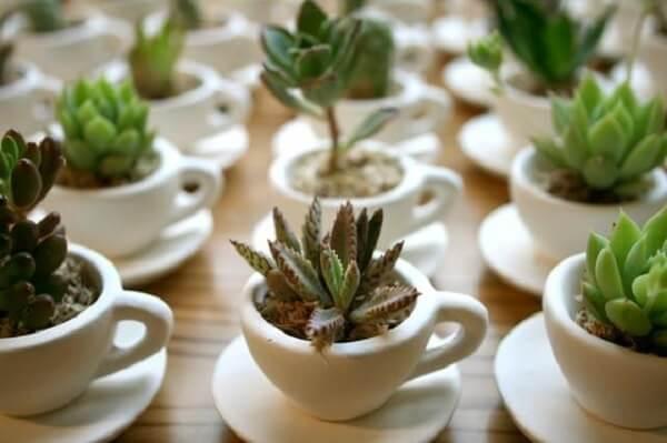 Plantas em xícara de café