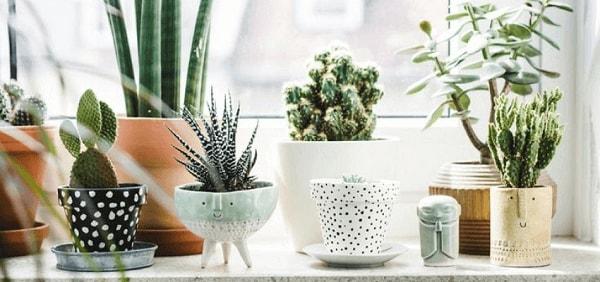 Plantas ornamentais para decoração decoracao de salas