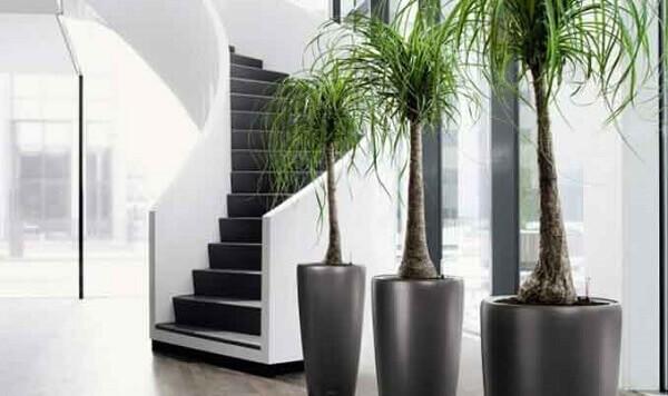 Plantas ornamentais para interiores com pouca luz