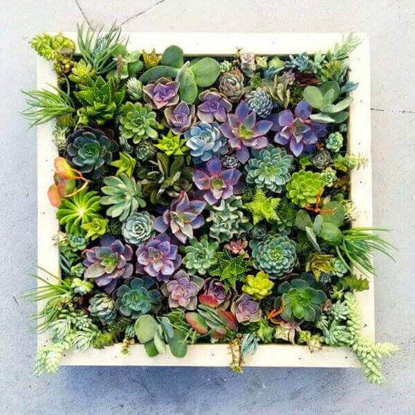Plantas suculentas em jardim vertical