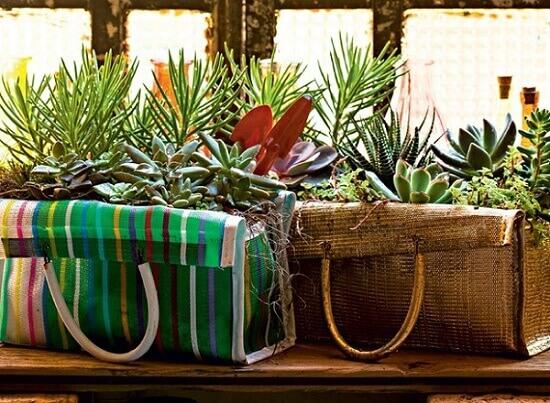 Plantas suculentas plantadas em sacolas