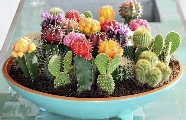 Vaso de plantas com cactos