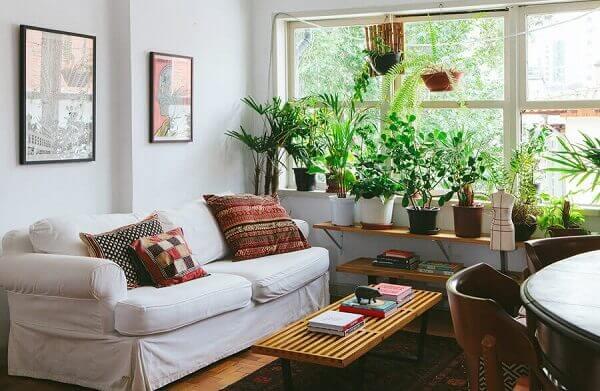 Vasos com plantas na decoração de salas