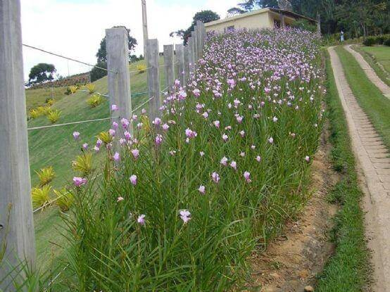 cerca viva com orquídea bambu