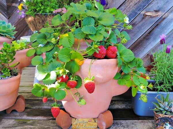 como plantar morango vasos decorativos