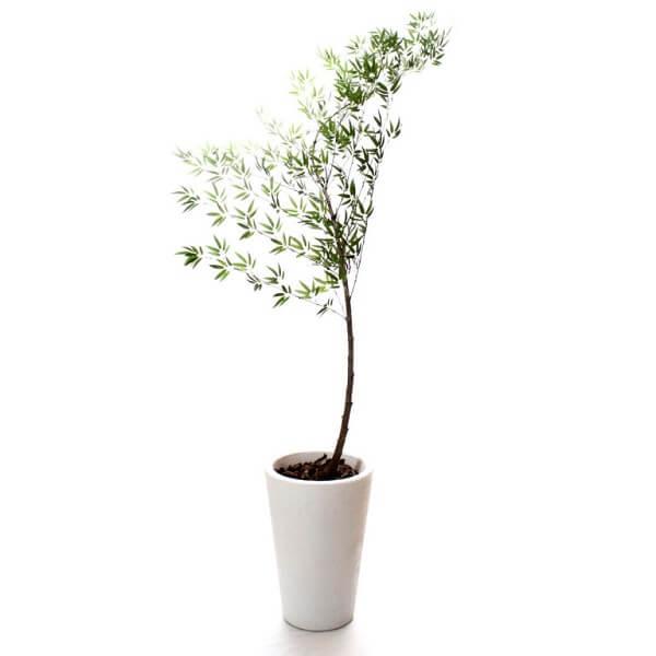 plantas bambu mossô