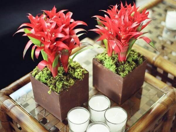 plantas ornamentais bromélia