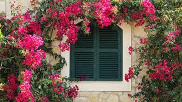 azaleias são excelentes plantas ornamentais