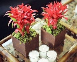 Bromélias em vasos, plantas ornamentais