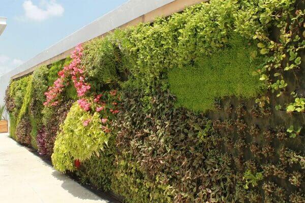 Muros de casas com jardim vertical