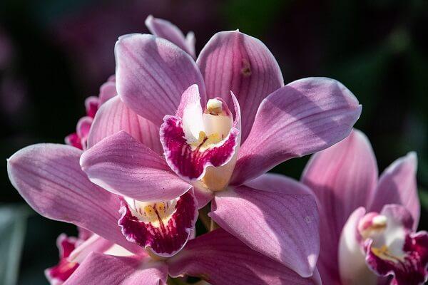 orquídeas, plantas ornamentais delicadas