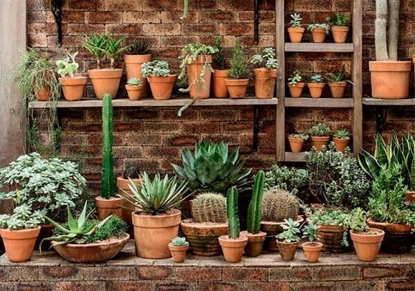 os cactos são plantas ornamentais que podem ser cultivadas em vasos