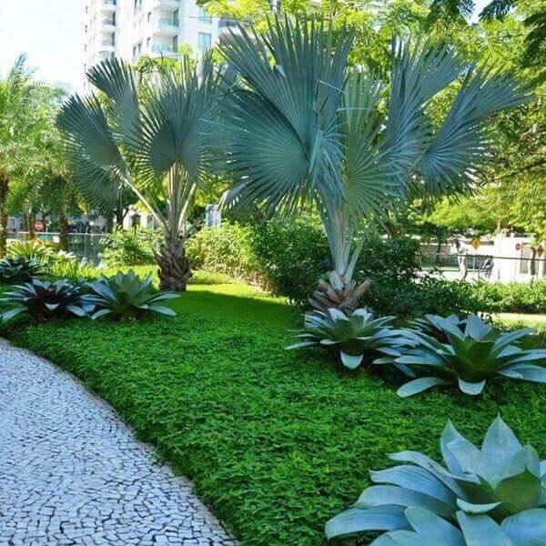 Palmeira azul com bromélias