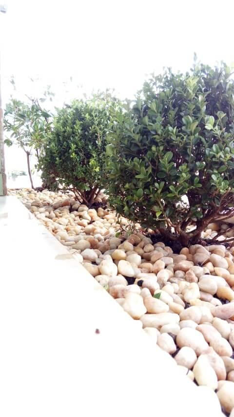 Pedras para jardim seixos com plantas pequenas Projeto de Casa Green Paisagismo