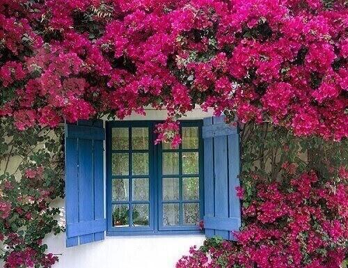 Plantas ornamentais de sol primavera