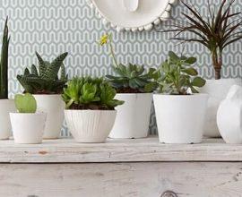 Plantas ornamentais na decoração de casa