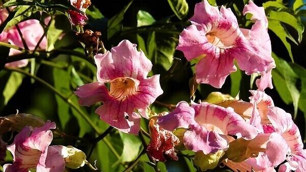 Plantas ornamentais sete léguas