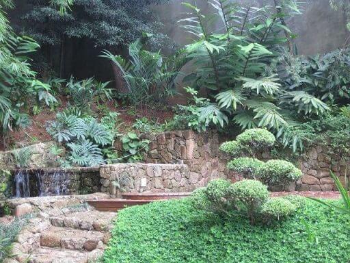 Plantas para jardim em cascata Alalou Paisagismo
