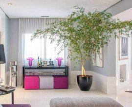 Bambu Mossô plantado em vaso decorativo