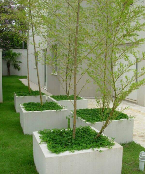 Bambu mosso plantados em caixas de concreto