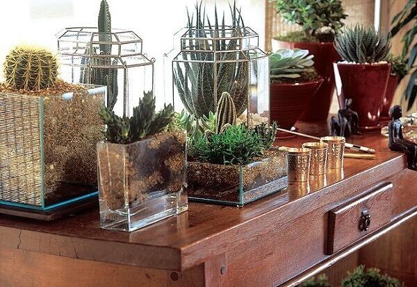 Cactos em mesa de madeira flores