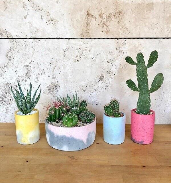 Cactos para decoração de ambientes