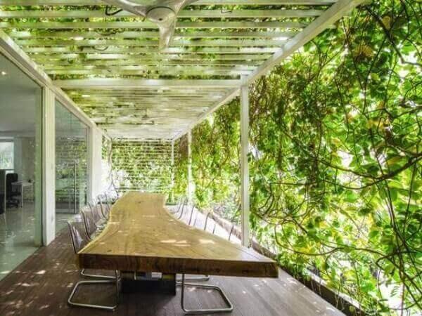 Trepadeira funciona como parede verde