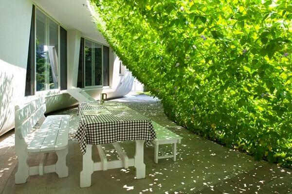 Trepadeira usada como cortina viva