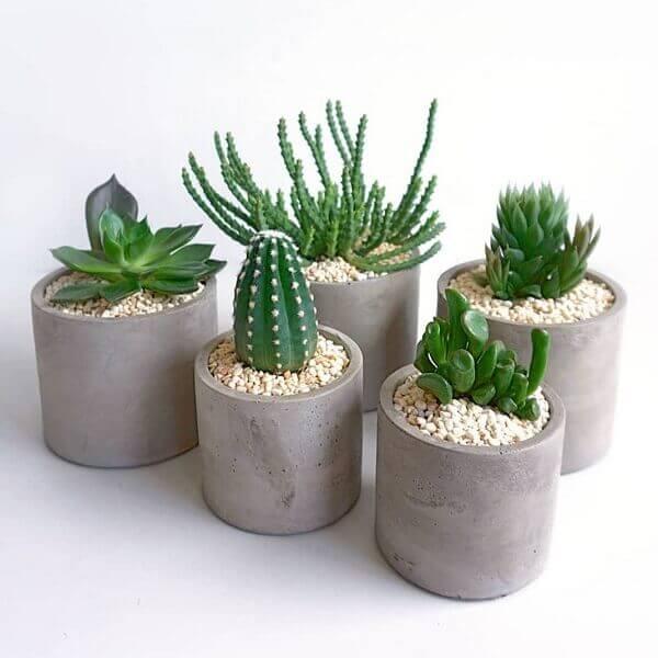 cactos em vasos de concreto