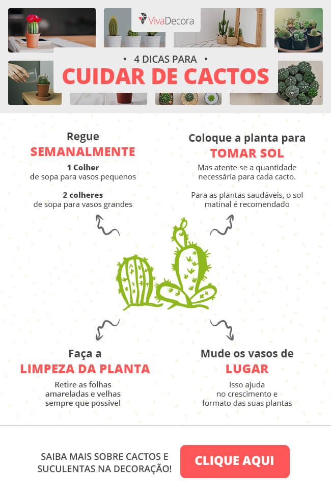 Infográfico - Como cuidar de cactos