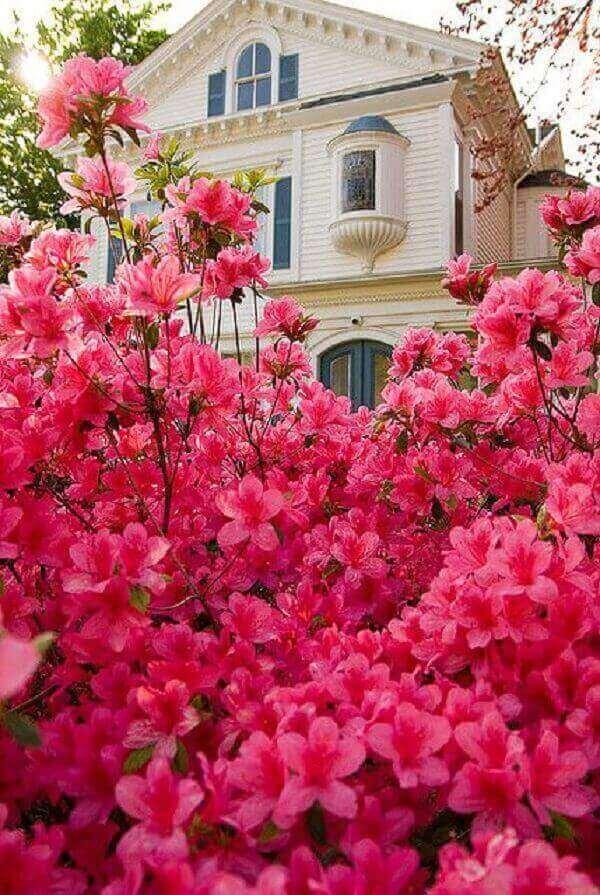 Azaléia no jardim casa luxuosa