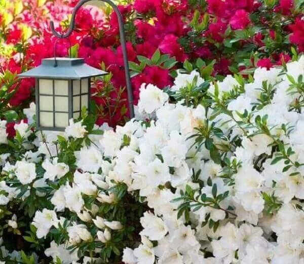 Azaleia decora com estilo o jardim