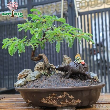 Bonsai com enfeite no vaso Foto de Happy Trees