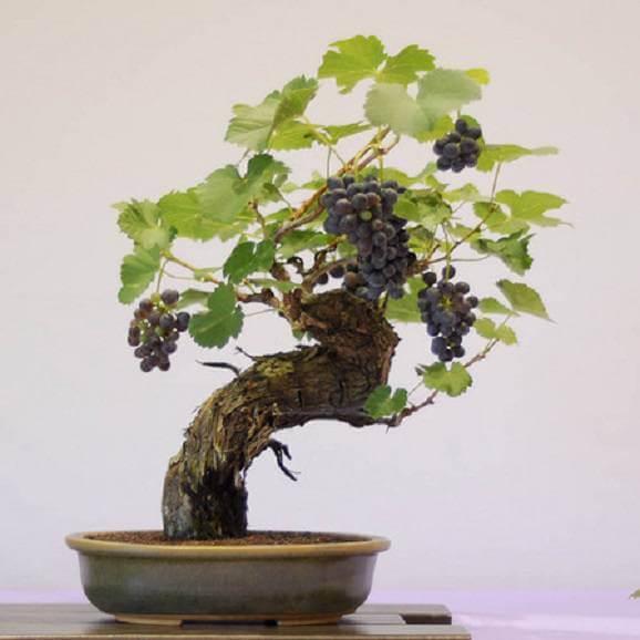 Bonsai saiba como fazer e cuidar 32 imagens lindas - Como cultivar bonsai ...