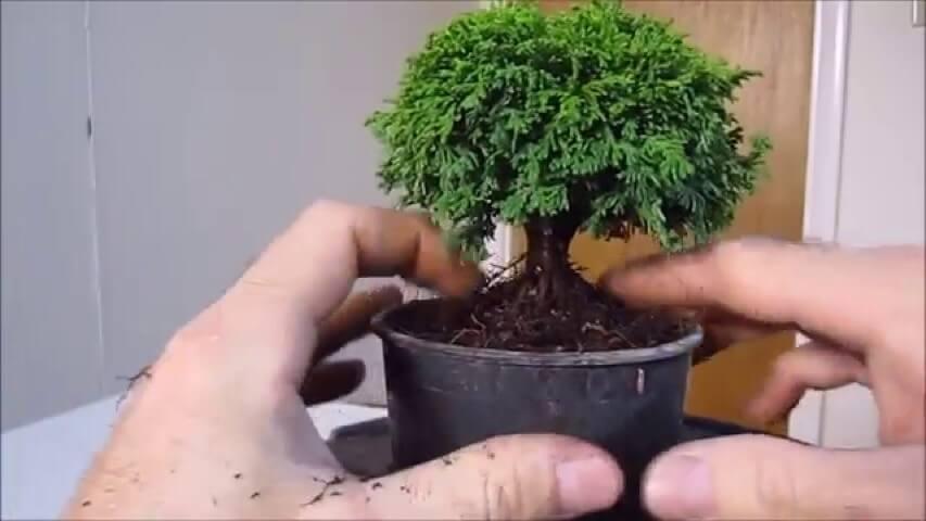 Como fazer bonsai Foto de YouTube