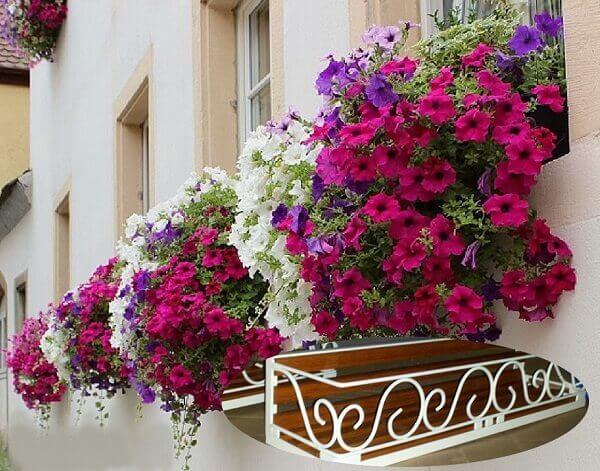Flores Lindas floreiras na janela