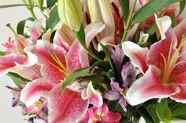 Flores lindas astromélia