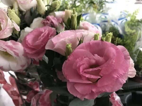 Flores lindas lisianto