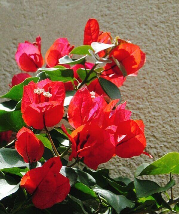 Flores lindas primavera