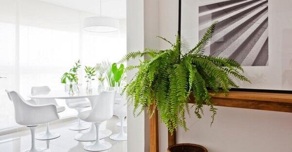 Samambaia decora ambiente
