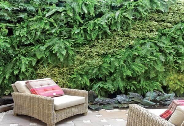 Samambaia em jardim
