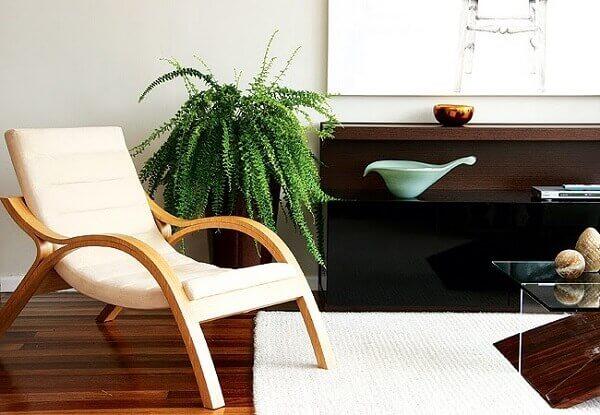 Samambaia em sala de estar