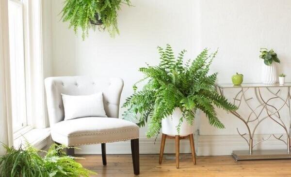Samambaia em vaso branco na sala de estar
