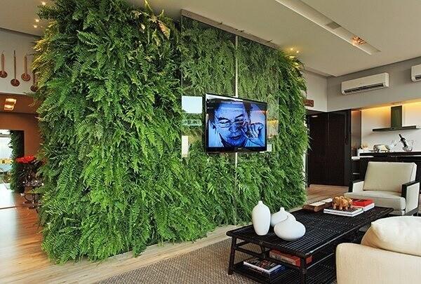 Samambaia jardim vertical em sala